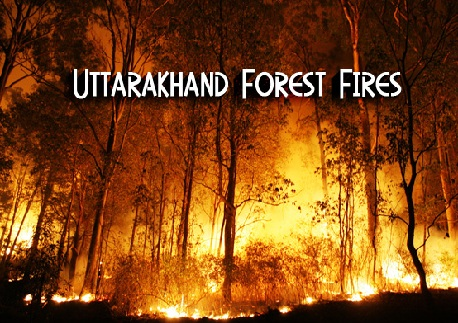 Recent Forest Fire in Uttarakhand Video