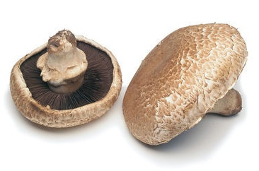 How to Grow Portobello Mushrooms/ Best Way to Cook