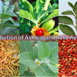 All about a Powerful Antidote of Stress – Ashwagandha