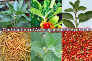 Ashwagandha-Powerful Antidote of Stress