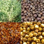 Advantage of eating Grams – Sprouted, Boiled or Roasted Chana Benefits