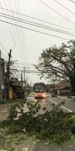 Typhoon Ompong Damage Video – Mangkhut hits China, Hong Kong and Philippines