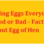Eating Eggs Everyday Good or Bad – Facts about Egg of Hen