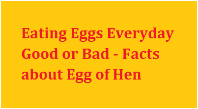 Eating Eggs Everyday Good or Bad - Facts about Egg of Hen